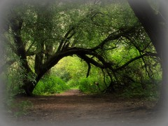 Gateway to fairyland........ (Ameliepie) Tags: wood trees summer green nature grass season forrest magic gateway fairies fairyland