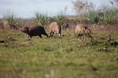 baudchon-baluchon (12 sur 43)