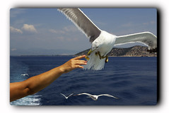 / Seagull (Zopidis Lefteris) Tags: summer seagull hellas greece macedonia allrightsreserved makedonia lefteris eleftherios    zop  theunforgettablepictures zopidis leyteris           photographerczopidislefteris c heliographygroup heliographygroupmember photographerzopidislefteris  photographerzopidislefterisc c  allphotosarecopyrightedbyzopidislefteris  copyright