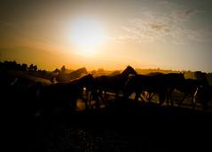 morning commute at the triangle x ([Adam Baker]) Tags: ranch park morning summer horse usa sun west silhouette canon drive xpro cowboy hole grand jackson dude national commute cowgirl teton wy 1740l gtnp trianglex sunrsie adambaker 5dmarkii getalonglittlehorsey