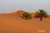 DUNAS DE MERZOUGA 3 (DIAZ-GALIANO) Tags: canon galiano morocco dunas 30d merzouga marraketch mywinners marrruecos