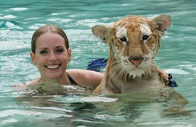 Swimming_with_Tigers_07