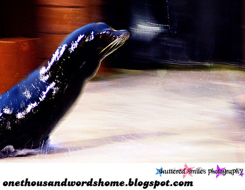 sliding sea lion