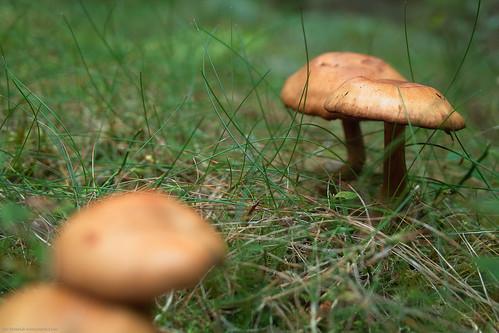 Polarized mushrooms - not reflecting sky at 2s