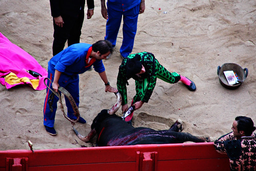 bull fight- cutting of the ear