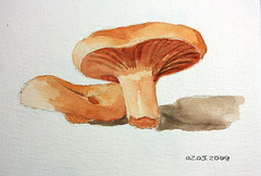 Red Pine Mushrooms 02.05.2009 (floria@net) Tags: art watercolor mushrooms drawing acuarela rovellons