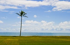 Kualoa Beach (Varin Tsai) Tags: ocean beach canon hawaii oahu sigma palmtree 10d lonely 28 tranquil kualoabeach 2460