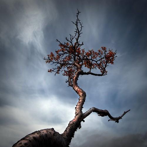 autumn (by johann Smari)