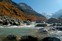Ova da Morteratsch (upsa-daisy) Tags: autumn alps fall water river schweiz switzerland stream wasser suisse herbst explore bach alpen svizzera fluss larch engadin lrche oberengadin morteratsch graubnden grisons upperengadine graubunden grigioni explored ovadamorteratsch