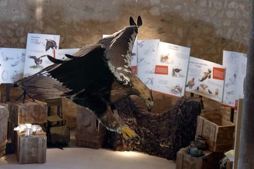 Centro de interpretación del Águila Imperial