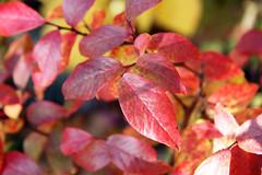 leaves 18