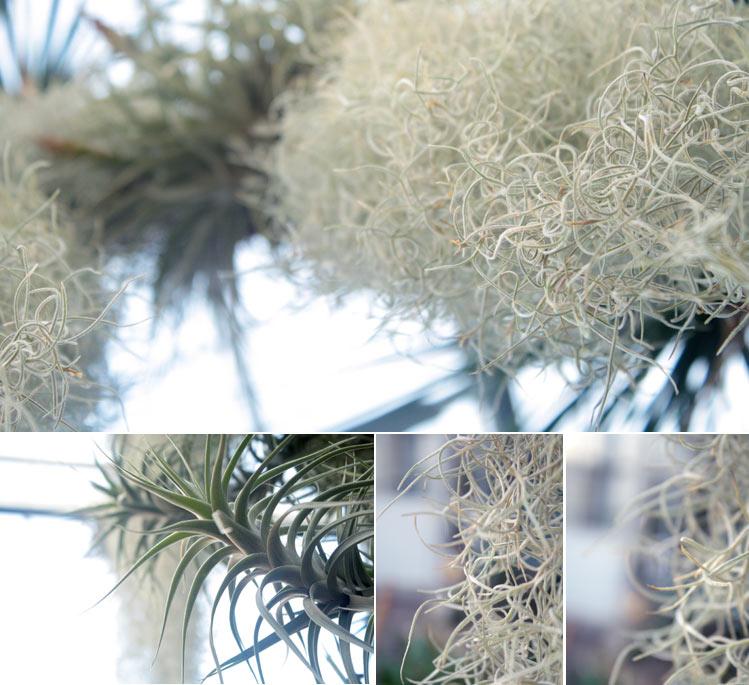 lightplants-3