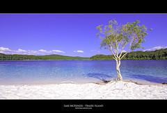 Lake McKenzie - Fraser Island - Australia (pascalbovet.com) Tags: blue white lake tree violet australia australien fraserisland whitesand lakemckenzie