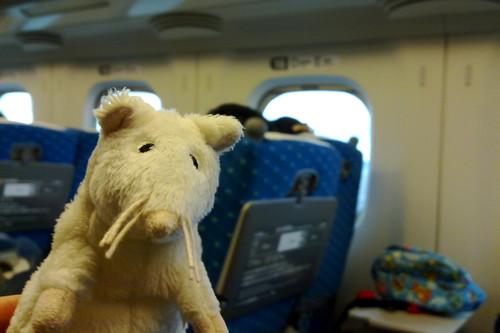 White-chan on Shinkansen Nozumi