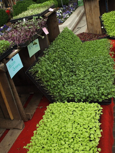 micro greens at market