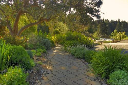 Mediterranean Garden in May