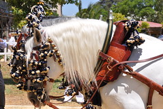Mane (Virues de Segovia) Tags: espaa horse caballo cheval spain espanha andalucia espagne cavallo cavalo pferd feriadejerez