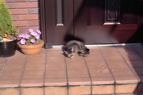 Today's Cat@20090529