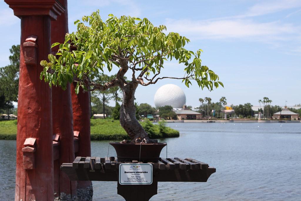 Beginner tree for New York? 3598794247_7e570bdb3f_b