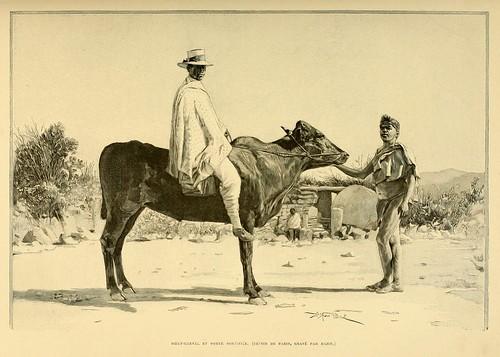 002-Buey usado como montura-Madagascar finales siglo XIX