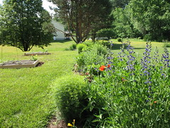 Back perennial border June 6