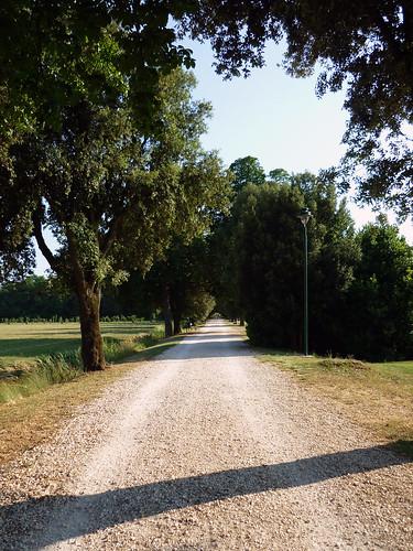 cascine di Tavola_il viale del Caciaio