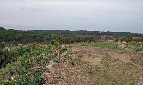 chobhamcommon-views2