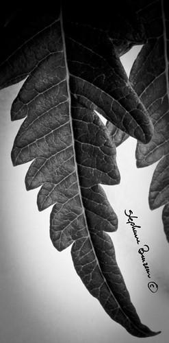 Herbal study a la Strobist 5