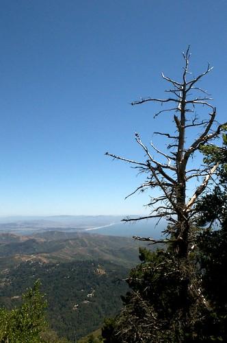 2009-7-6 Mt Tamalpais 30