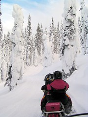 REVELSTOKE (vermillion$baby) Tags: winter revelstoke snowmobiling snow highcountry vista mountain tree people fun bc pattys favs pattysfavs cold ice red active activity landscape snowmobile trail revelstokef trees