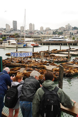 Sea lions @ Pier 39