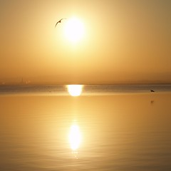 Sun flights above water (jovidoes) Tags: sunset espaa naturaleza sun lake bird art nature water valencia birds lago photo interesting spain agua europa europe flickr foto arte photos paz aves explore pjaros ave flights brilliant flu photostream belleza goldens reflejos pjaro oro brillo visin percepcion albufera equilibrio armona pennsula tranquilidad pennsulaibrica serenidad dorados perellonet parajenatural gavines ibrica relajacin expolore comunitatvalenciana avesmigratorias perell platinumheartaward goldstaraward jovidoes magicunicornverybest parajeprotegido joaqunvicente joaquinvicente joaquinvicenteesp