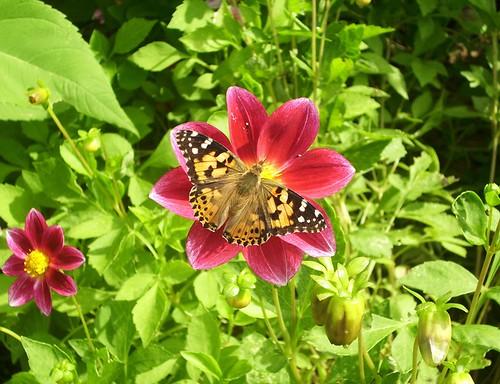 Butterfly medail