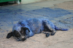 The Unknown Story Of The Blue Dog