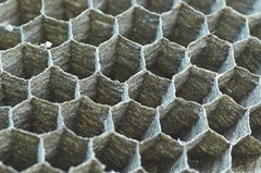 Can you call it honeycomb when it was built by wasps?