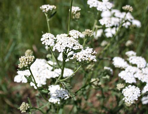 smwildflower028