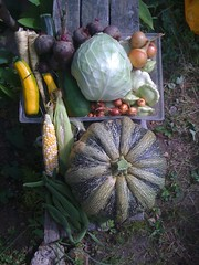Today's Veg Box