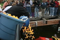 Rubber Ducks Being Poured Into Milwaukee River