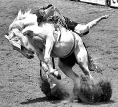 Bucking Horse (Marvin Bredel) Tags: horse motion oklahoma cowboy action rodeo shawnee rider marvin saddle bronc bucking marvin908 internationalyouthfinalsrodeo rebelt1i canoneosrebelt1i bredel marvinbredel