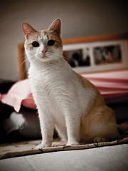 Magnetismo Animale! (davdenic  in the sky ) Tags: cats pets cat kitten sigma felino felini miao gatto gatti domestico animali animale micio gattino gatte gatta fourthirds