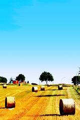 hArvESt SeASon (pigimo) Tags: grain harvest hay cereals 2009 heu getreide gerste weizen roggen hafer ernten