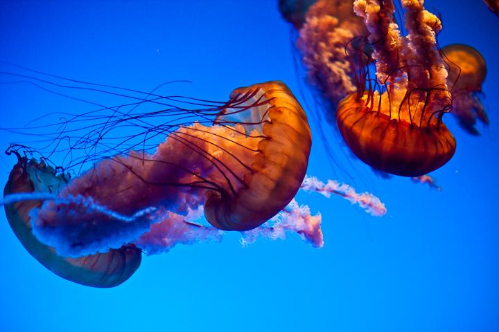 20090925_Aquarium-58-3