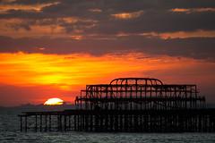 Brighton #16