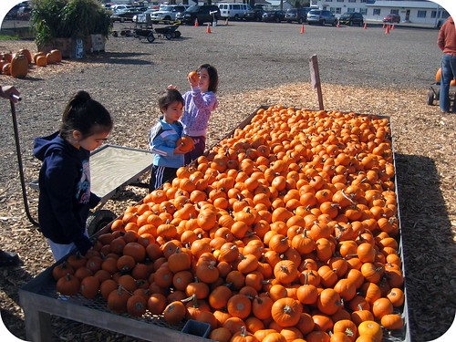 Picking Perfect Pumpkins