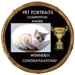 PET PORTRAITS 1ST PLACE COMPETITION AWARD -1