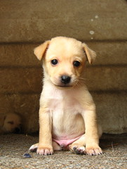 Through the eyes of a puppy (Sebastin-Dario) Tags: dog pet cute beauty animal puppy puppies sleep perro hund beaut cachorro beleza sonno sono mascota animale chiot tendresse bellezza cucciolo mascote sommeil schlaf mascotte welpe ternura maskottchen tenerezza tierischen zartheit schnheiten
