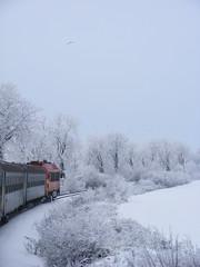 Polgárdi-Ipartelepek (Farkas Balázs) Tags: train railway 29 mav lok ganz m41 vonat vasút mavag ganzmávag mávag ganzmavag