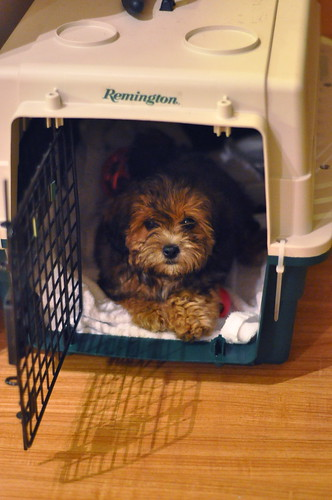 Step 1: put your pup in the box