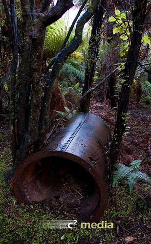 Logging remnant