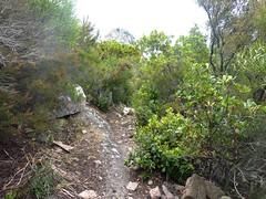 Sentier de montée au col Sud du Castellacciu : en vue du Castellacciu